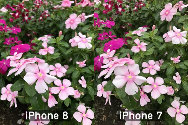 iPhone8とiPhone7の写真比較(花)