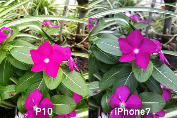 P10とiPhone7カメラ比較3