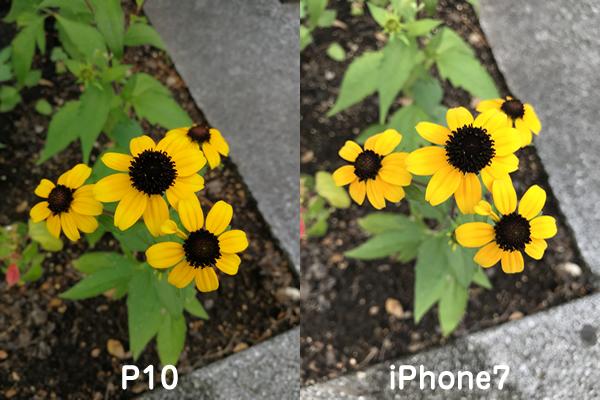 P10とiPhone7カメラ比較4