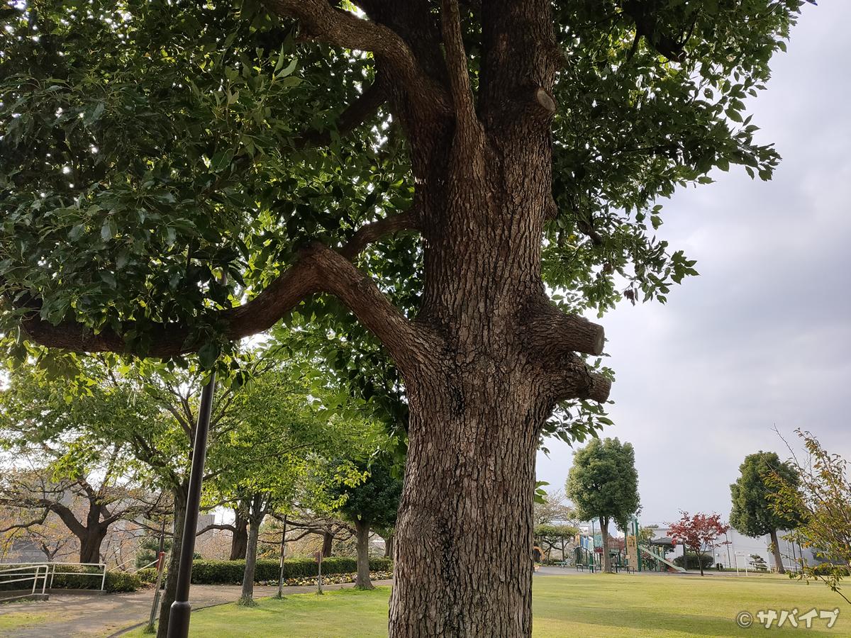 OPPO Reno Aのカメラで公園の木を撮影